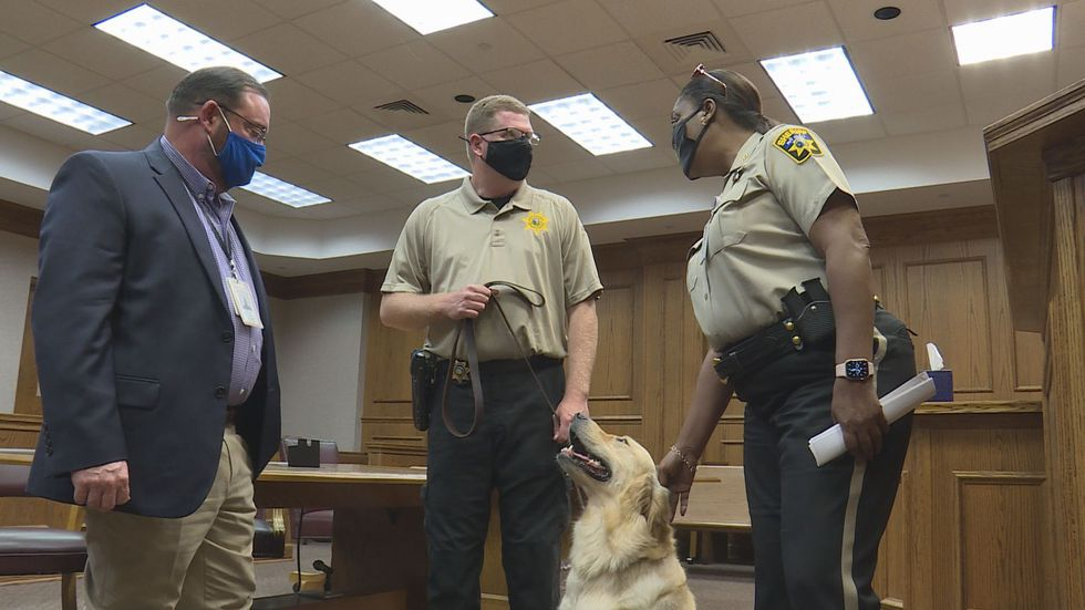 """""""Drifter"""" the emotional support Deputy Dog in the Courthouse of the Pitt County Sheriff's Office."""