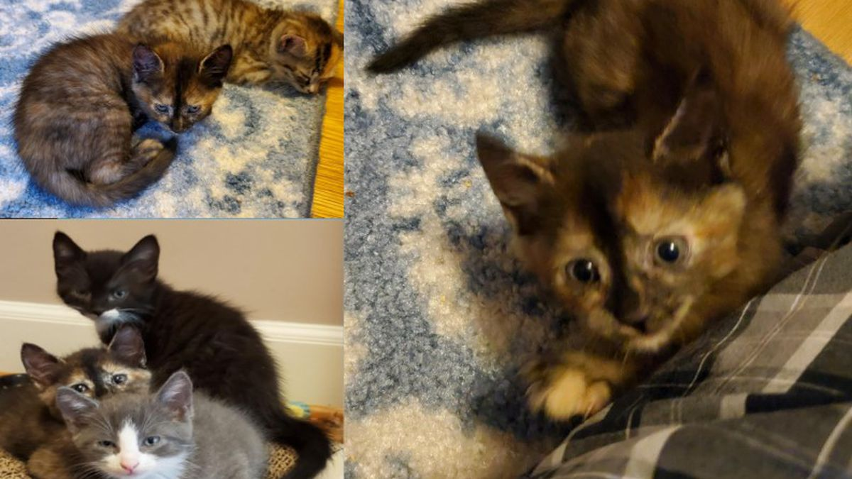 Asher, Spice, Gingersnap, and Autumn