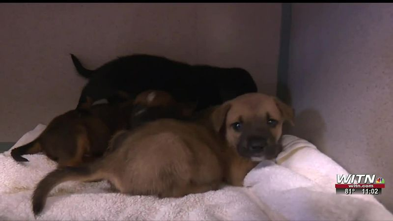 Lenoir County animal shelter offers new services but needs volunteers