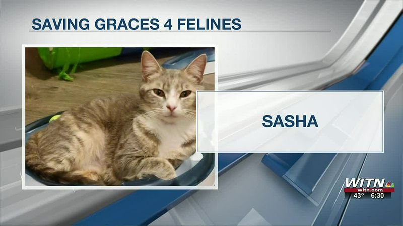 Saving Graces 4 Felines: Sasha