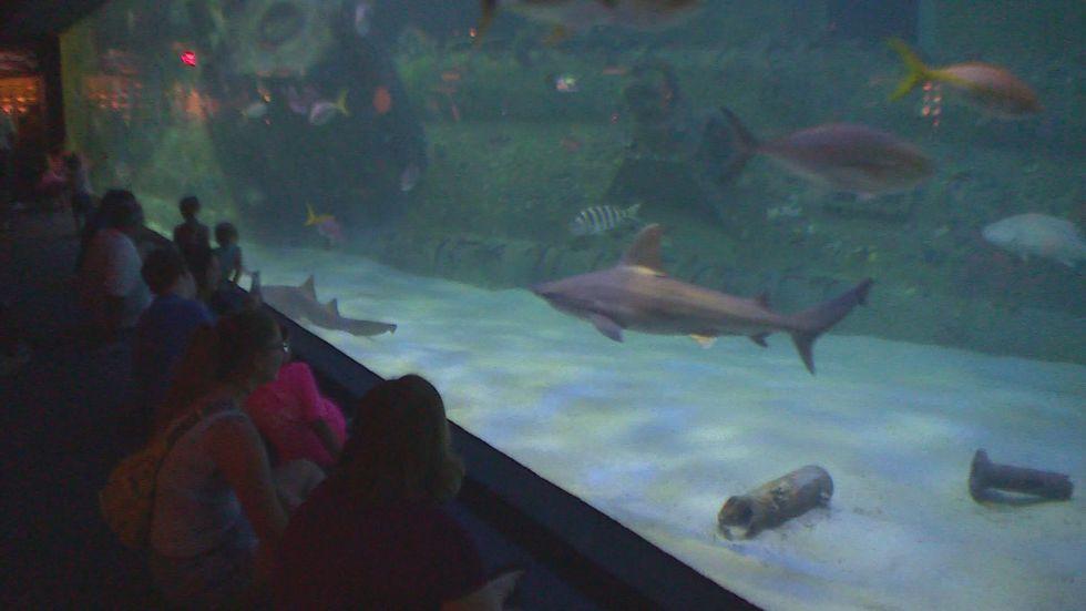 Shark week at NC Aquarium at Pine Knoll Shores