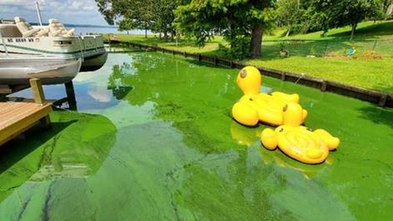 Toxic algal bloom found in parts of the Chowan River