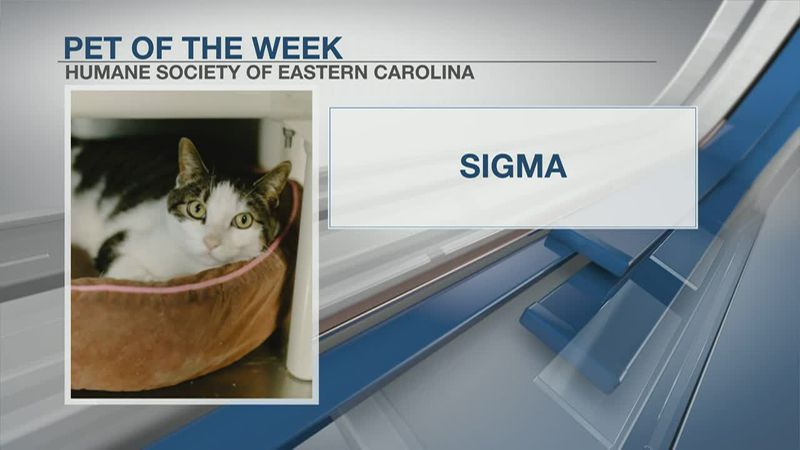 Pet of the Week: Sigma