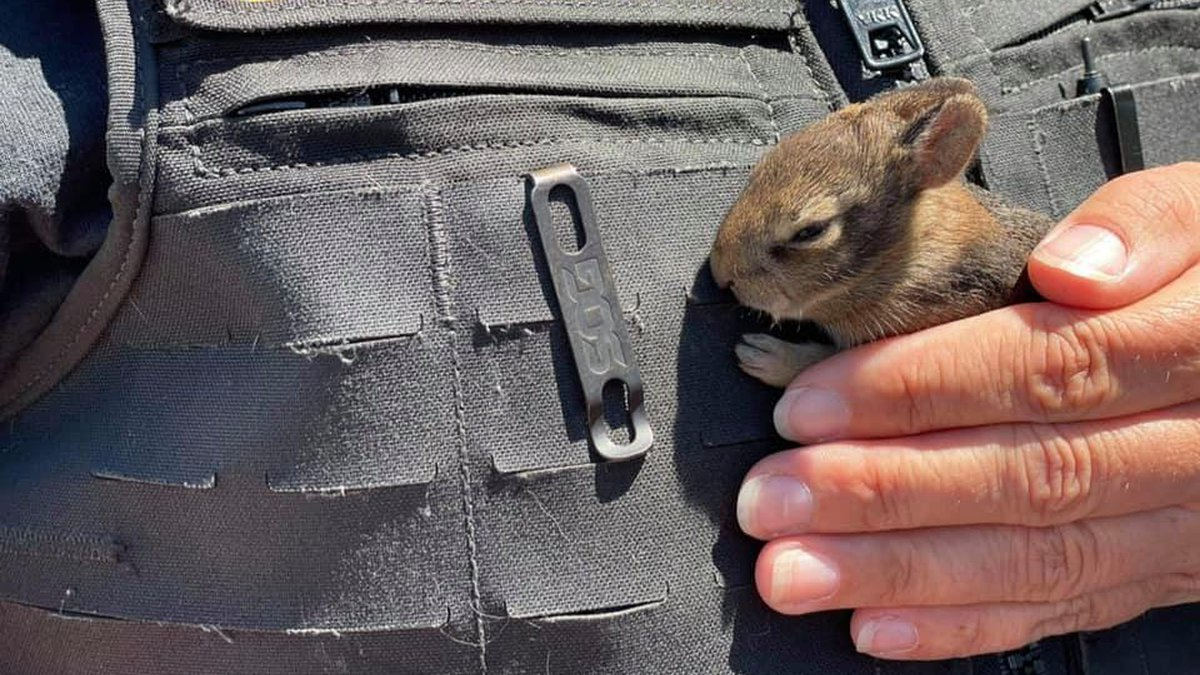 Some bunnies were saved from a grass fire in the backyard of a home in New Bern on Saturday.