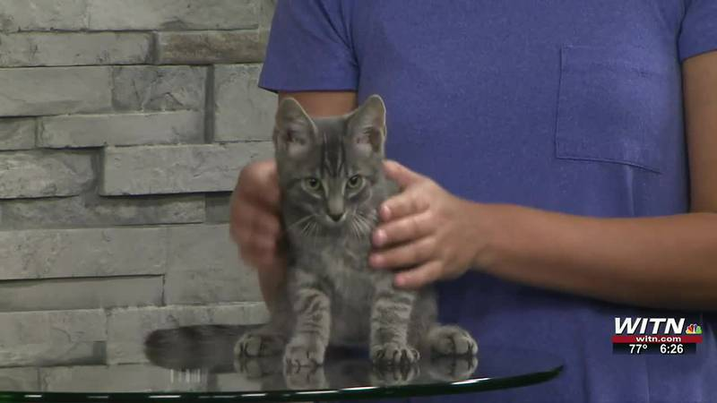 Saving Graces 4 Felines: Ziggy