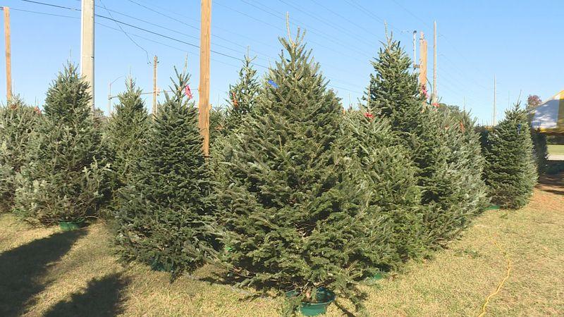 Christmas Tree lots open in Greenville.