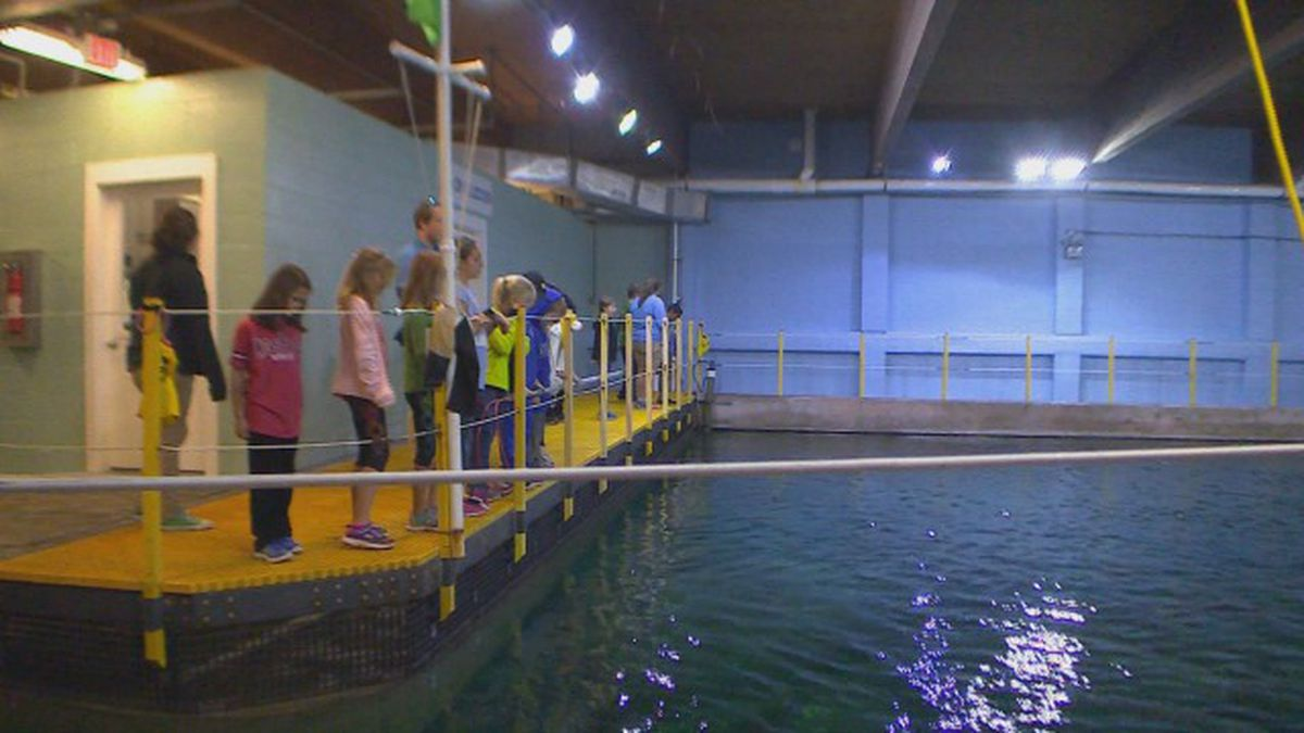 Pine Knoll Shores aquarium offering winter camp for kids