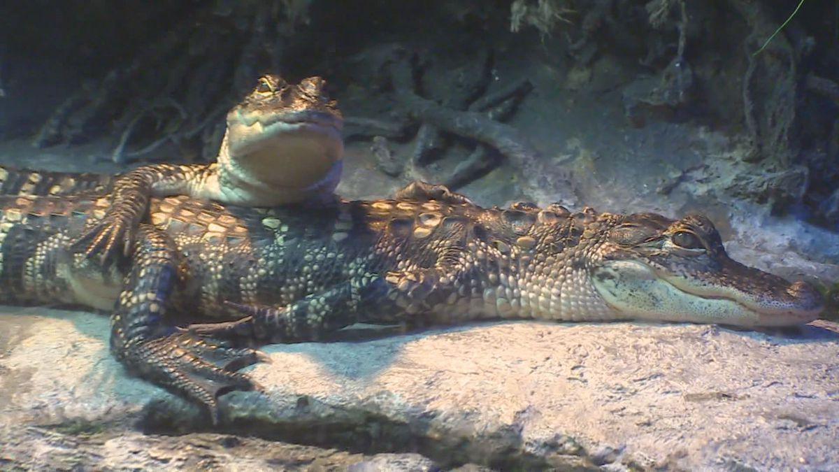 N.C. Aquariums announce changes for re-opening.