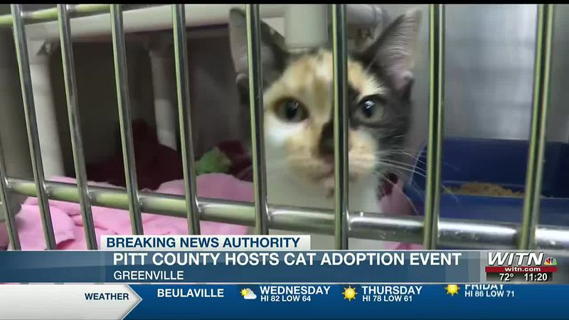 Pitt County Animal Shelter to host cat adoption event