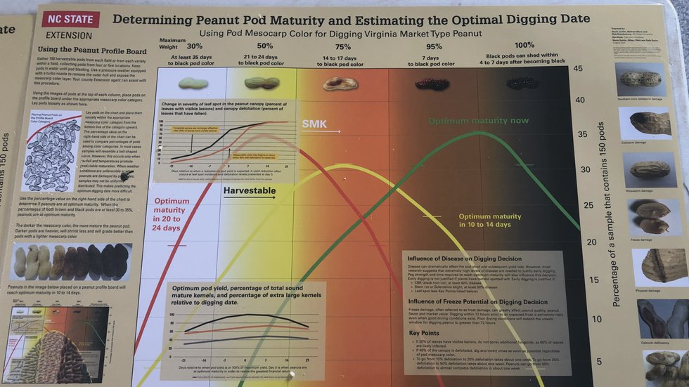 The peanut profile chart is used to estimate when the optimum maturity of a peanut field will...