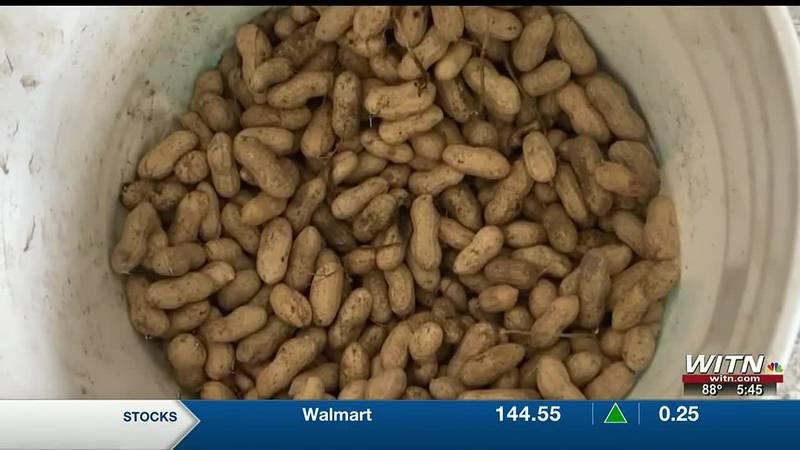 Peanut pod blasting helps N.C. farmers