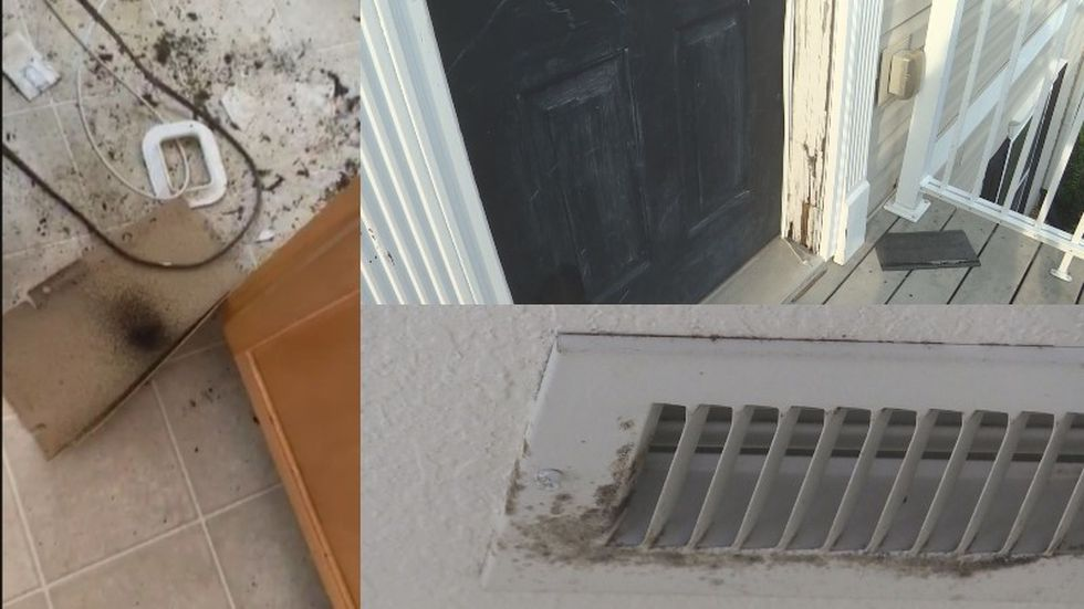 Viewer photos and videos complained of mold, bug infestations, broken or damaged furniture, stained carpets and beds, and malfunctioning air conditioning, among other concerns