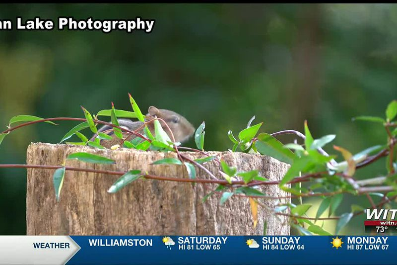 Seen any chipmunks lately in eastern North Carolina? NC Wildlife needs your help!