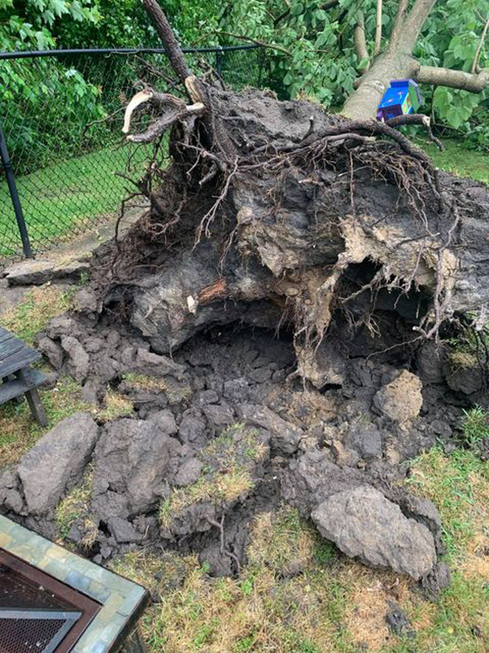 Large tree down following storms in Simpson