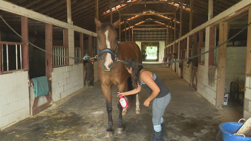 Hunter Haven employee sprays a horse with tick preventative.